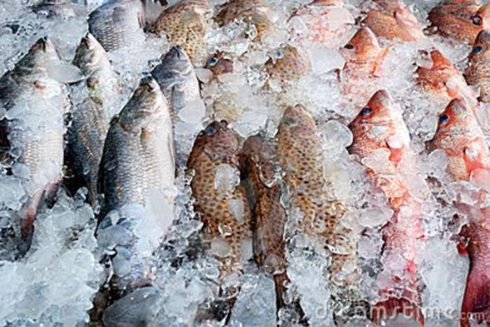 pesci-congelati-7176642